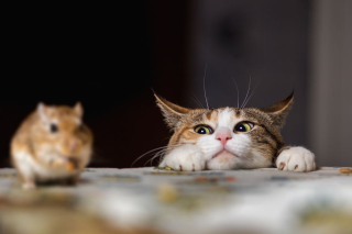 Cat-playing-with-little-gerbil-mouse-on-thetable-507209918-5aa963921f4e1300371a3099